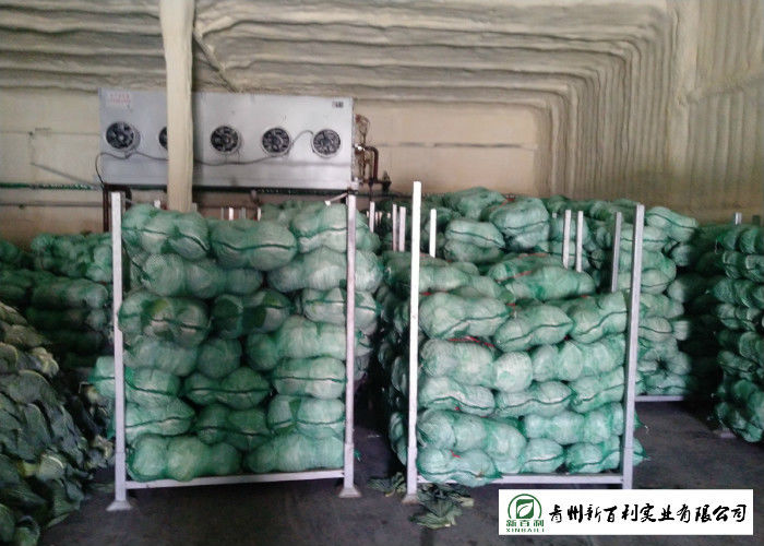 Good Taste Chinese Round Cabbage , Small Green Cabbage 1 Kg / Per Size