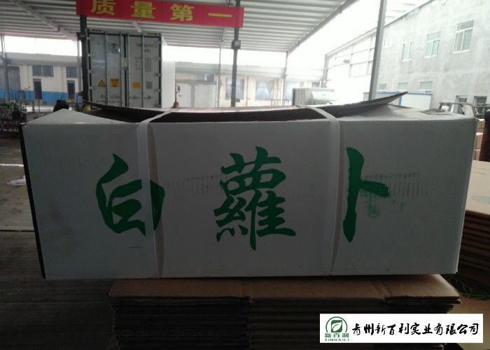 Own Plantation Fresh White Radish Supply To Frozen Vegetable Factory