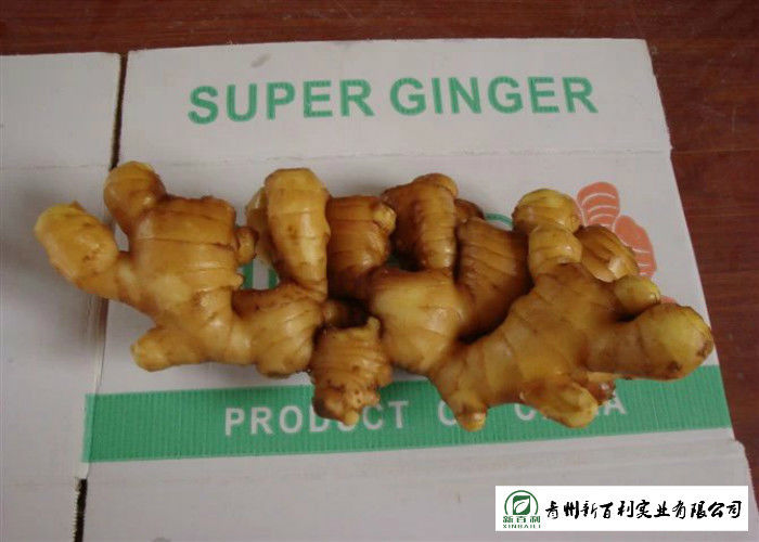 150 - 300 G / Per Fresh Yellow Ginger Sell To Supermarket And Wholesaler